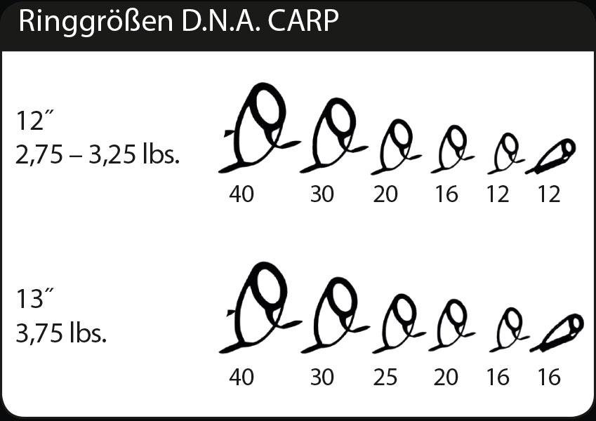 Ringgrößen DNA CARP